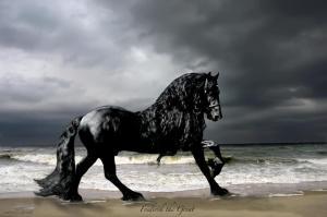 Frederik the Great Friesian Stallion