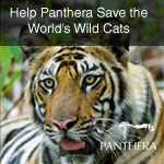 Save the World's Wild Cats - Help Panthera