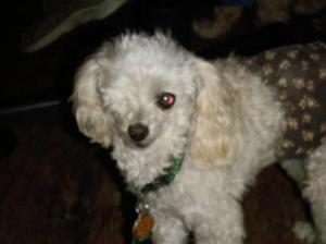 Tiny Tim or TT - House With a Heart Pet Sanctuary