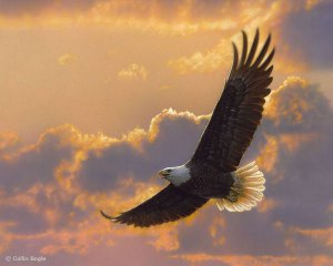 Soaring Spirit by Collin Bogle
