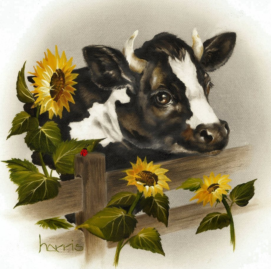 Bull & Sunflowers by Peggy Harris