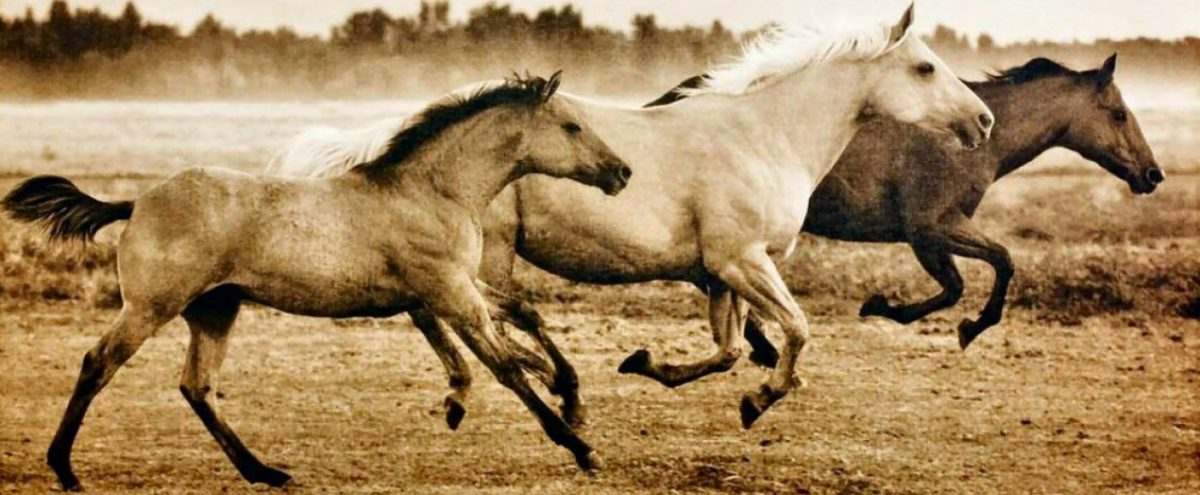 Focus on Animals, Art & the Mindful Life