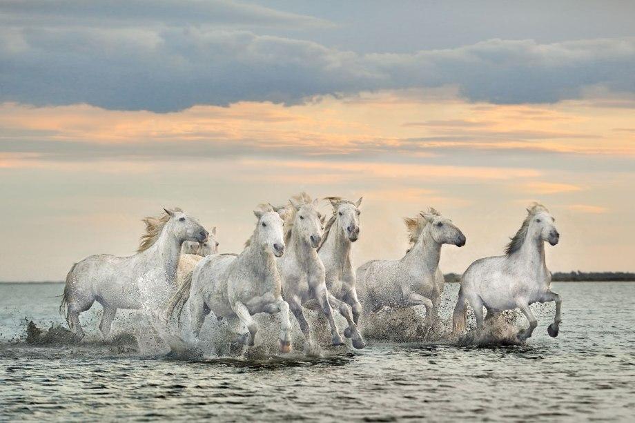 """Camargue Horses"" Fine Art Photography by Xavier Ortega"