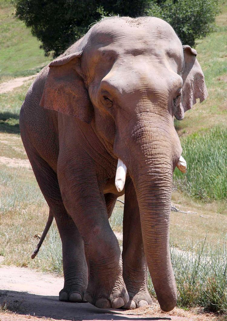 Elephants Nicholas and Gypsy – 10th Anniversary atPAWS